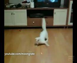 Крабо-кот