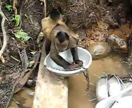 Чистоплотная обезьянка (4.977 MB)