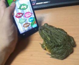Лягушка и смартфон (2.225 MB)
