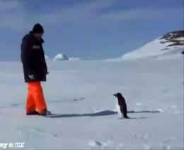 Человек и пингвин (490.180 KB)