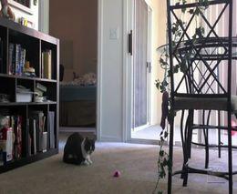 Трусливый кот и музыкальная игрушка (6.110 MB)