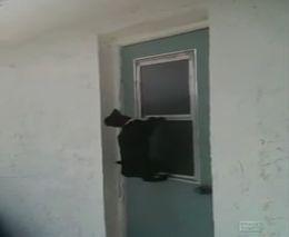 Кот открывает окно (1.440 MB)