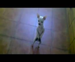 Пляшущий пес (3.339 MB)