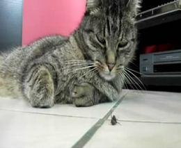 Насекомое и ленивый кот (5.795 MB)