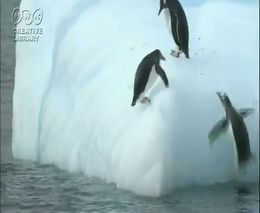 Пингвины и айсберг (7.074 MB)