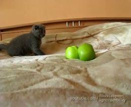 Котенок и очень страшные яблоки (7.421 MB)