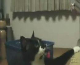 Кот хочет, чтобы на него обратили внимание (2.384 MB)
