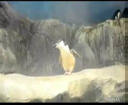 Пингвин-дабстеп