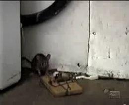 Мышонку