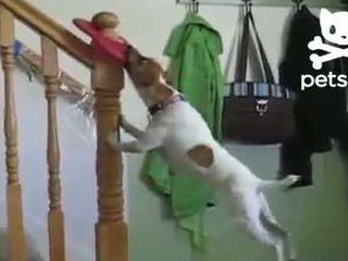 Забавный маленький пес (3.713 MB)