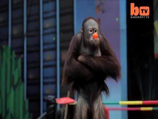 Бой приматов (9.969 MB)