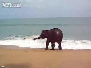 Милый слоненок на пляже (3.947 MB)