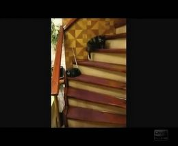 Кот поднимается по лестнице, пританцовывая вальс (2.519 MB)