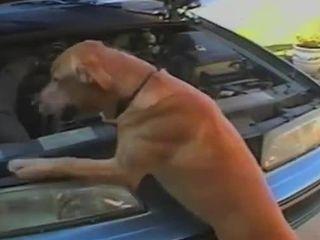 Собака помогает (5.949 MB)