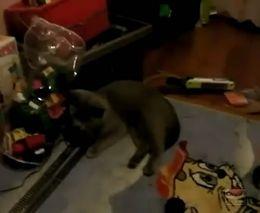У кота депрессия (5.180 MB)