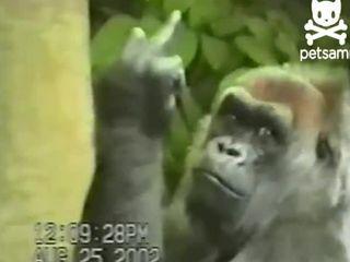 Невоспитанный примат (6.786 MB)