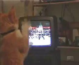 Кот смотрит бокс и отрабатывает удары (1.367 MB)