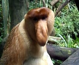 Забавный примат (1.809 MB)