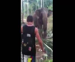 Слону не понравился турист (2.156 MB)