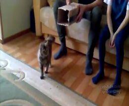 Кот и маленькая коробка (576.149 KB)