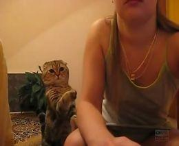 Кот хочет ласки (2.788 MB)