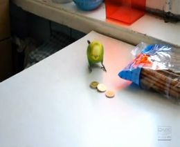 Попугай играет с монетками (4.305 MB)