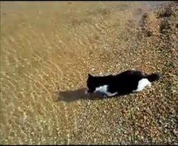 Кот - любитель поплавать (4.369 MB)