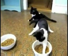 Коты после наркоза (2.583 MB)