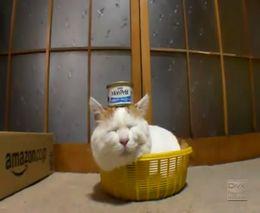 Терпеливый котяра (1.733 MB)