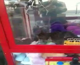 Живая игрушка в автомате (689.731 KB)