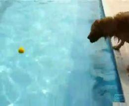 Бедняга боится прыгнуть в воду за мячиком (5.138 MB)