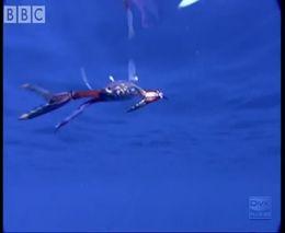 Интересный подводный мир (4.785 MB)