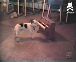 Песик играет на пианино (1.588 MB)