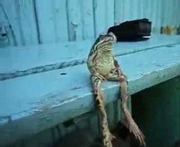 Ленивая лягушка (3.715 MB)