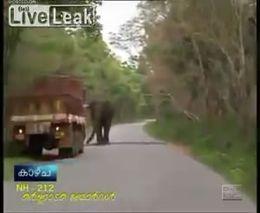 Слон атакует (1.158 MB)