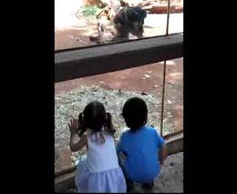 Шимпанзе испугала детей (2.483 MB)