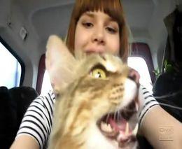 Кошак