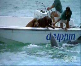 Дельфин поцеловал собаку (1.072 MB)