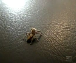 Нападение паука (822.186 KB)