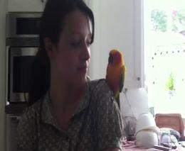 Забавный танцующий попугай (2.839 MB)