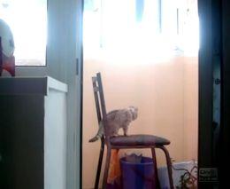 Кот-гимнаст