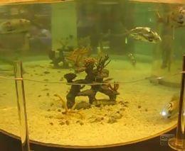 Рыба - робот (3.831 MB)