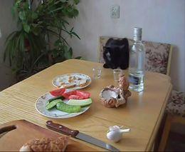 Кошак-алкоголик