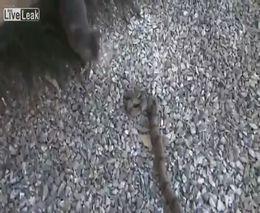 Кот и змея (4.892 MB)