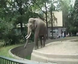 Слон не в духе (2.020 MB)