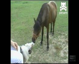 Поцелуй лошади и собаки (3.495 MB)