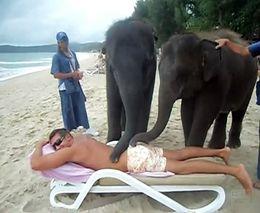Слоны - массажисты (6.212 MB)
