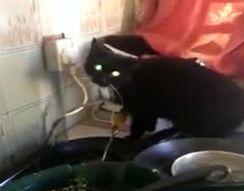Кот залез в окно и устроил погром на кухне (3.891 MB)