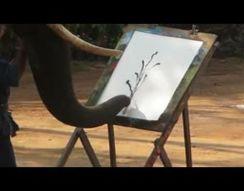 Слон рисует картину (6.714 MB)