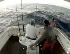 Рыба атакует (3.600 MB)